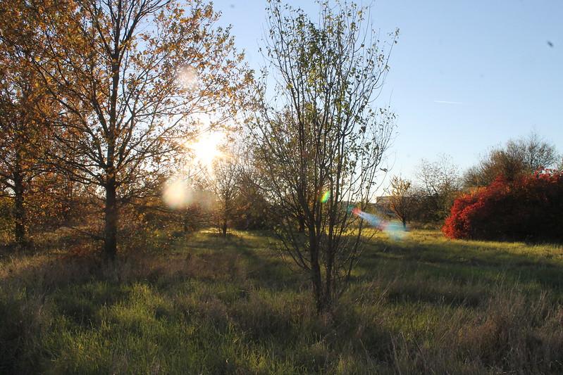Più verdi e belli i quartieri di Reggio Emilia: si piantano 5350 nuovi alberi